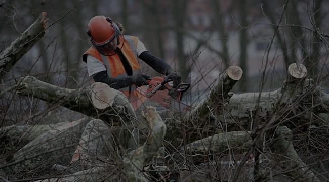 Winnipeg Tree Service